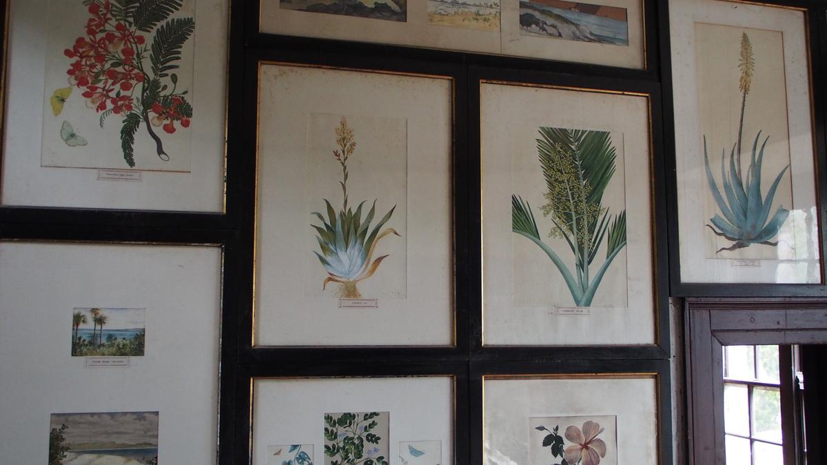 Edith-Blake-watercolours-in-Myrtle-Grove.JPG#asset:13666