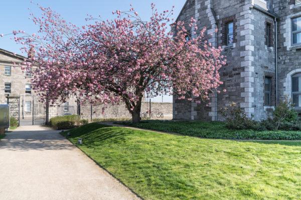 Walking Tour of Grangegorman with Dublin Decoded's Arran Henderson